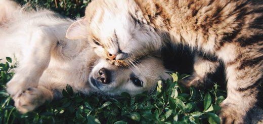 HUNTER - udstyr til hunde og katte