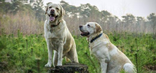 Køb billigt  Arion hundefoder hos Simbas Foder