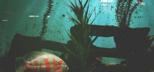 Find det rigtige akvarium til dit hjem